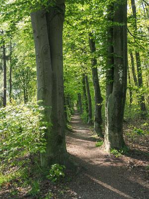 Ein herrlicher Radweg findet sich an der Grenze nach Holland in Burlo.