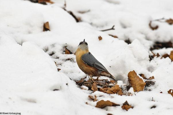 Kleiber im Schnee