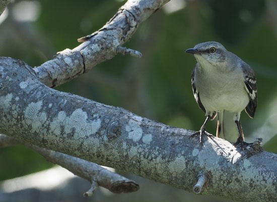 Morgens und auch abends singen die Vögel ganz herrlich.