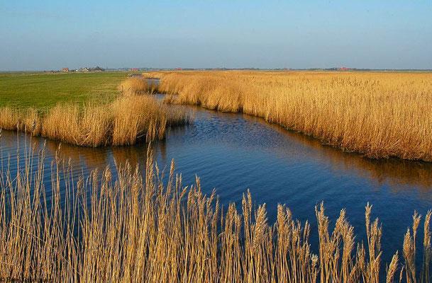 Ameland/Niederlande