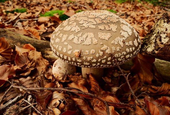 Im Herbst finden sich jede Menge Pilze.
