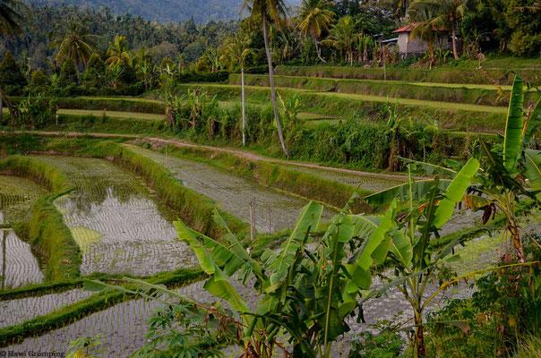 Bali/Indonesien