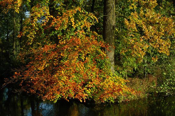 Ein Spaziergang lohnt sich zu jeder Jahreszeit, aber die Herbstfarbensind ein besonderes highlight.