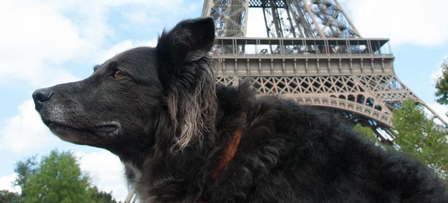 Mit Hund am Pariser Wahrzeichen