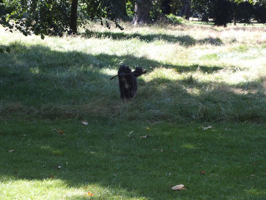 Spaß im Hyde Park