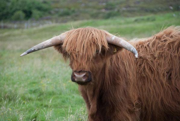 Who is who der Highlands, Schottland