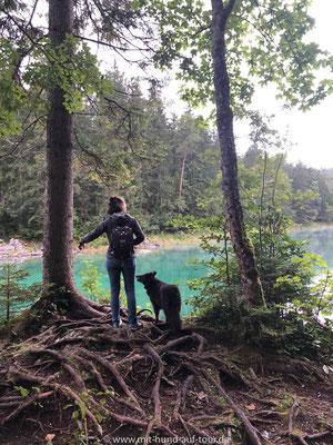 Mit Hund am Eibsee morgens um Sieben