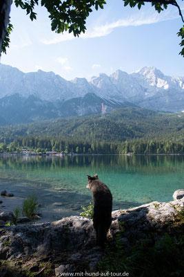 Mit Hund auf Tour am Eibsee in Bayern unter der Zugspitze