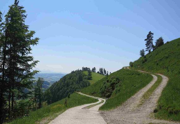 Dicken Richtung Bergli/Zöblisnase Bildrecht Neckertal Tourismus