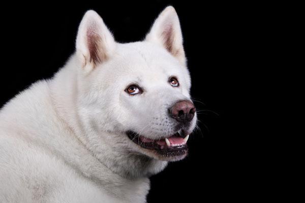 Archie Star Dogmodel looks over shoulder