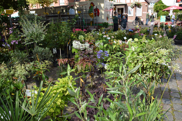 Osterholz Scharmbeck Pflanzen kaufen