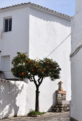 Benaocaz, orange tree