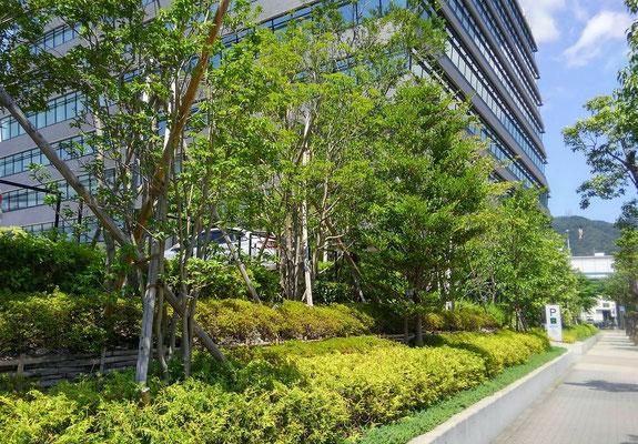 企業の緑地