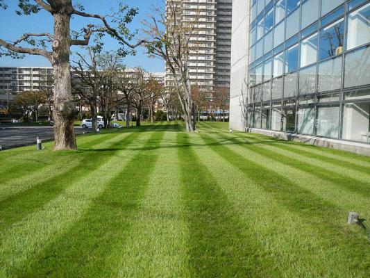 企業の芝生