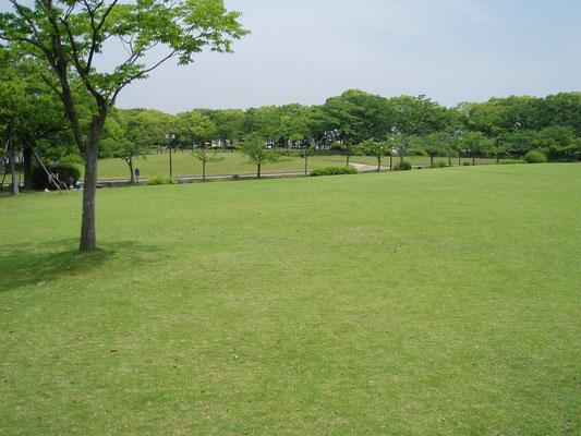 加古川文化センター 芝生管理