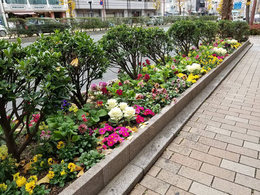 三宮北エリア花壇管理業務