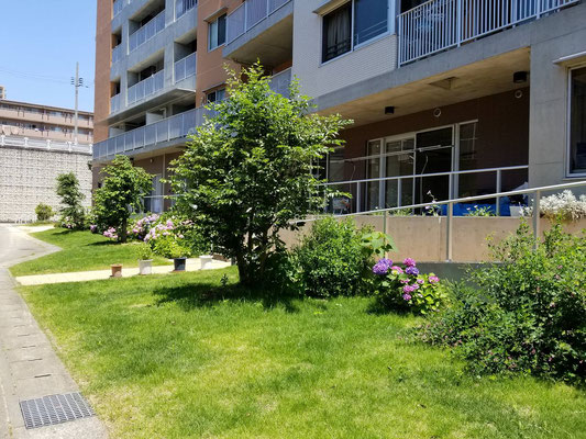 サービス付き高齢者向け住宅の緑地