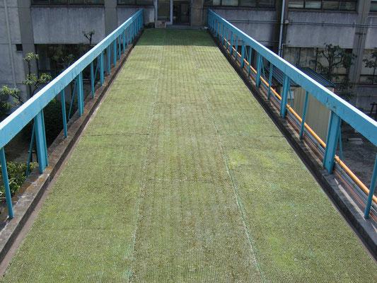 工場の屋上緑化