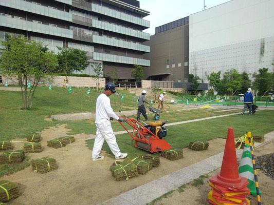 集合住宅の芝生やりかえ