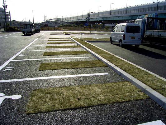 教育施設の駐車場緑化