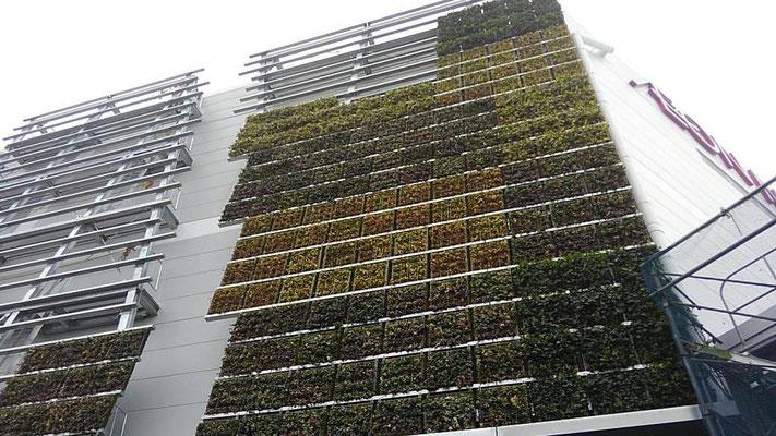 商業施設の壁面緑化