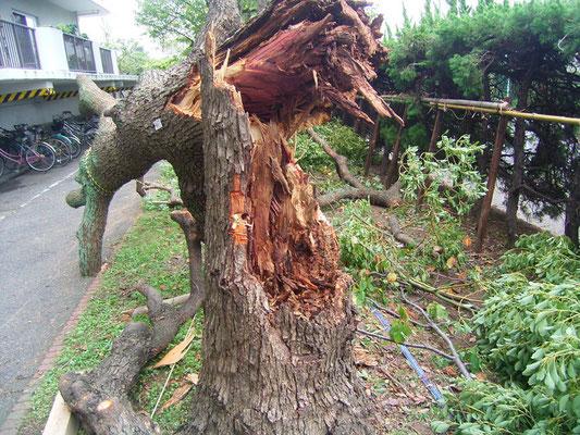 台風などの倒木処置