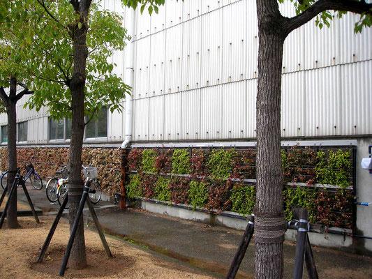 工場の壁面緑化