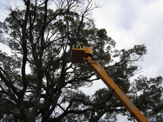 緑地改修等による樹木伐採