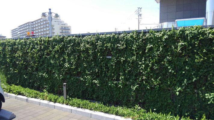 銀行の壁面緑化