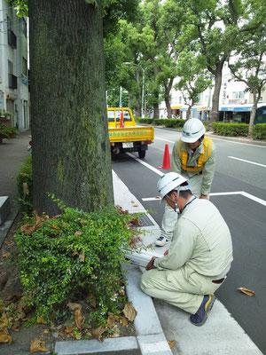 街路樹の診断