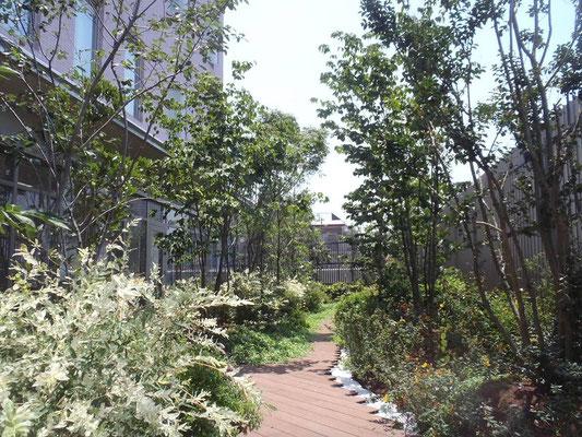 教育施設の屋上緑化