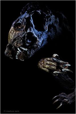 ÖTZI-FRATZI - Eine liebe Kundin hat diesen gruslig mumifizierten Marder in ihrem Keller hinter der Heizung entdeckt.