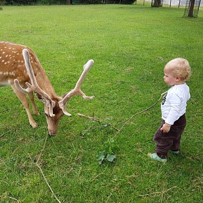 Der kleine Felix füttert unseren Horst.