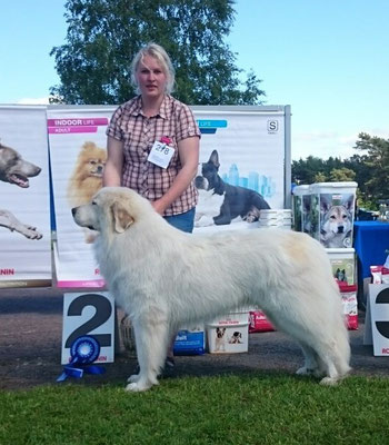 Echo de'Chien Aslan Warrior winning group 2nd in Luige Nat show on Sunday 28th of June 2015