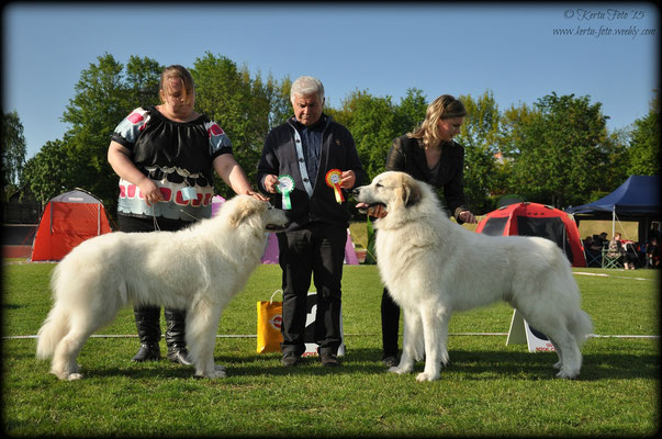 BOS - Echo de'Chien Bewitched & BOB - Chenespace Tarbesan