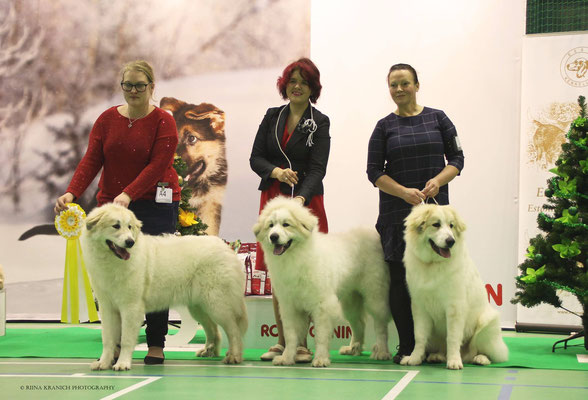 Best in Show Breeder #3