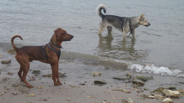 Henry (links) war auch da und noch ein unbekannter Hund, die sind aber noch zu wild und groß für mich.