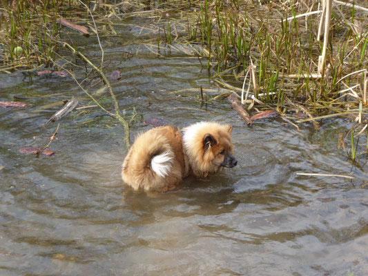 ... aus Versehen bis zur Brust im Wasser ... Bina hat's vorgemacht!