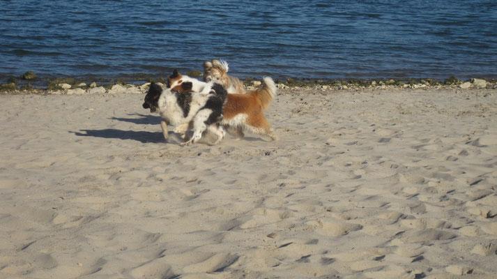 01.10.2015: Bina, Karo und Caatje haben Spaß in Heidenfahrt am Rhein