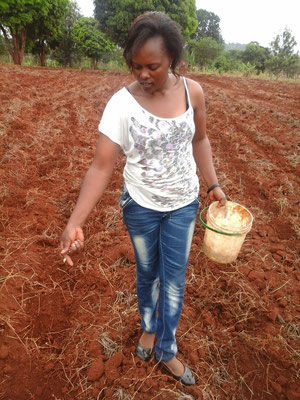 Immer dabei, Susan beim säen vom Mais...