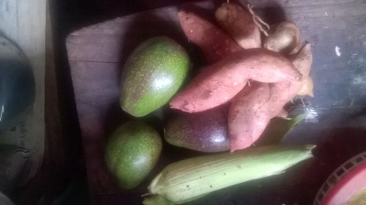 Unsere erste Ernte, Süsskartoffeln, Avocados und Mais...