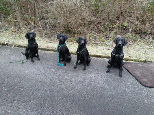 Von links nach rechts: Hope, Hazel, Fine, Mojo (aus dem G-Wurf)