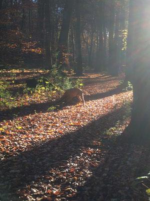 Sammy, unser Dauer- Praktikant findet Herbst auch ganz spannend! ;-)