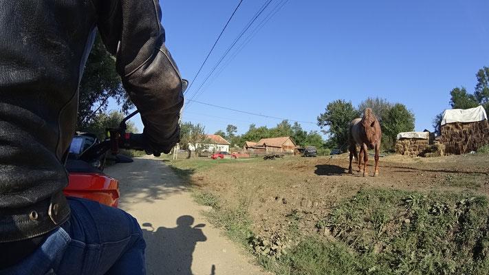 Alles abegrast - armes Pferd
