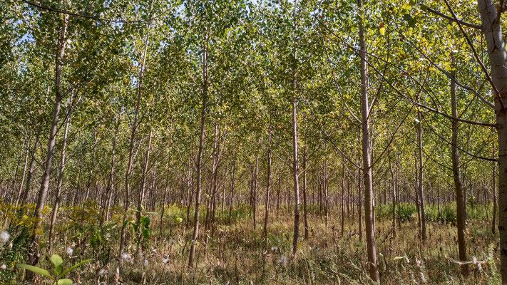 ungarische Wälder