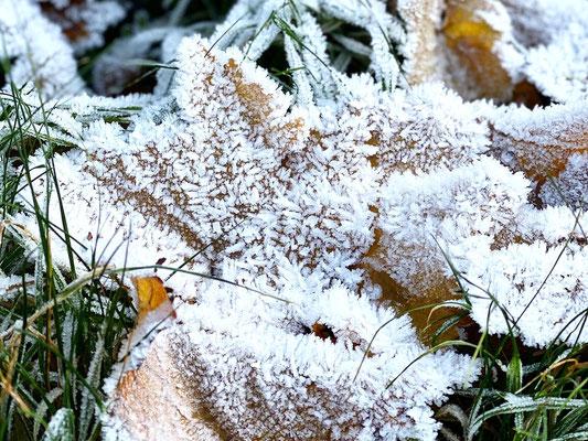 13. Jänner 2020: ganz schön kalt