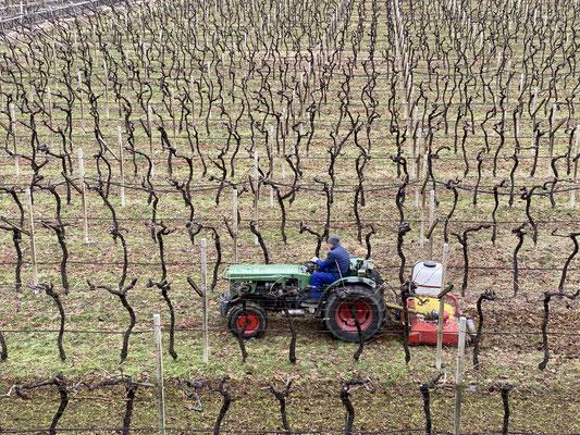 03. Februar 2021: Mit dem Mulchgerät wird das Rebenschnittholz aufgehäckselt und auf dem Boden belassen.