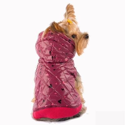 manteau rose chien