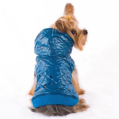 manteau bleu chien