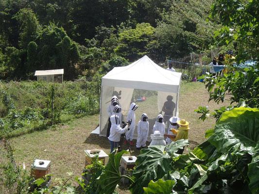 le site du rucher-école bourdonne.... comme dans une ruche !